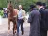 Hipp at the first trot up