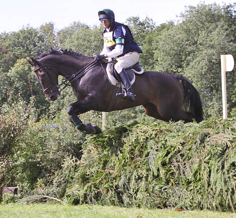 Moose at Little Gatcombe