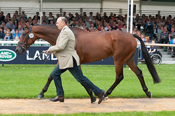 Bill Levett and Improvise at the 1st Horse Inspection